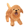 Art Chien Nintendogs Ultimate