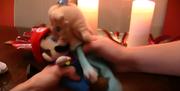 Mario x Rosalina