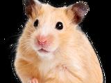 Pee Pee Suck (Hamster)
