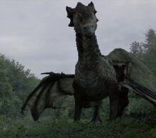 510 dragon