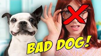 DOGS RUIN RELATIONSHIPS! (BTS)