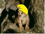 Hero as a Lynx cub