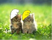 Smurf Kittens