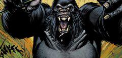 GorillaGroddList