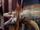 Screeching Iguana