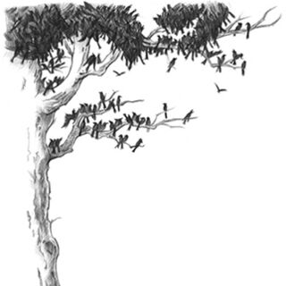 Crows on the Nevermore Tree.