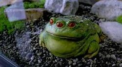 Tibetan Three-Eyed Toad