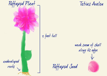 File:DruidflowerPuff.jpg