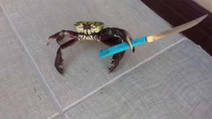 Crab knife