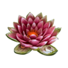 Ingredient-Lotus-SmallIcon