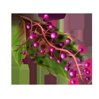 Ingredient-Cruxberries-SmallIcon