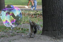 Bubbling squirrel