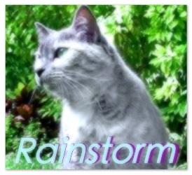 Rainstorm0.2