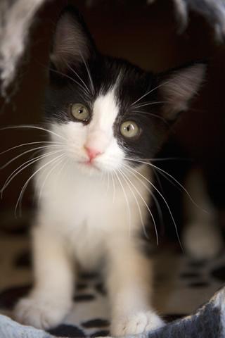Black white kitten jpg