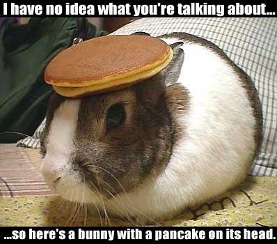 File:No idea bunny.jpg