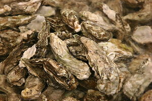 File-Oysters