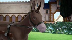 Jade's pet donkey