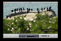 Miro 4.0-Mac OS X