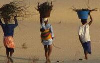 Natuur.koepel vzw SenegalBelgium