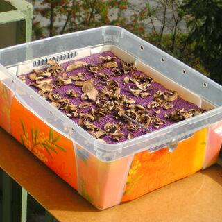 3) Champignons secs