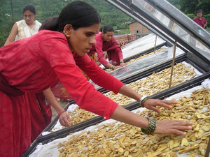 Solar drying of ginger, Center for Rural Technology, Nepal, 2-1-16