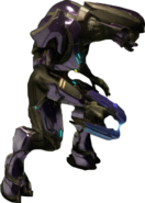 Special Operations Sangheili