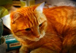 02 05 photos theta extra cats