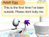 Adult Egg