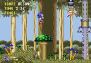 Mushroom hill mushroom