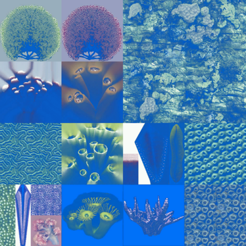 File:Ssh coral 01-hd result.png