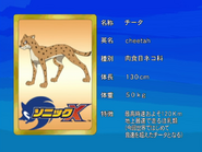 Sonic X karta 35