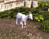 Blue Streak goat