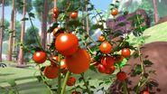 S1E29 Tomatoes
