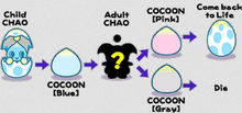 Chao life cycle