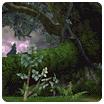 Battle Mode - Deep Woods