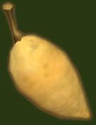 File:Baobab Fruit.png