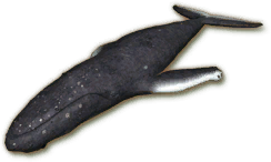 File:SU Whale Ornament.png