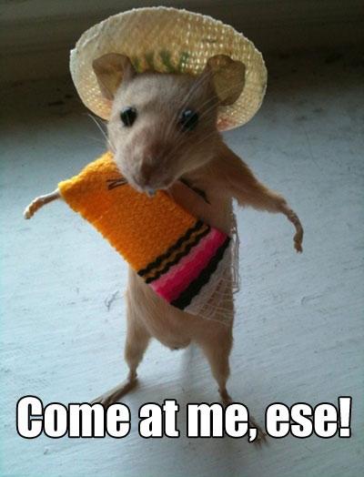 Funny Mexican Rat Sombrero Jpg