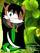 Wildcat the Bumblecat