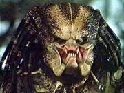 Classic Predator