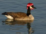 Duck duck by xx midnightlight xx-d6m37vx