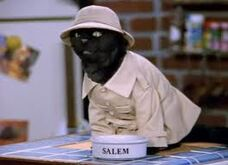 Salemthecatreal