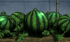 Melone(1)