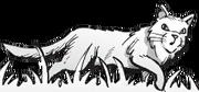 Leijonaroihumanga