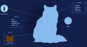 Sinitähti-nettisivu