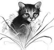 Tiikeritähti.KK-3