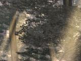Unknown Forest
