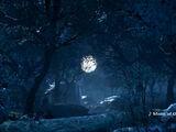 Cursed Moonlit Woods