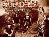 Seek 'n' Strike