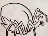 Fruit Spider
